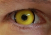 Желтый Вампир
